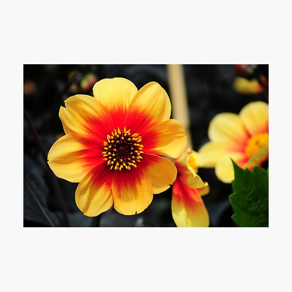 Eden Project flower Photographic Print
