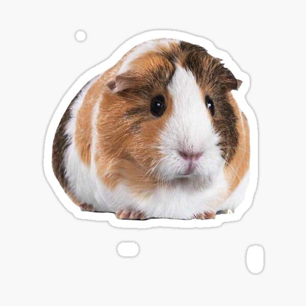Cute Guinea Pig Sticker