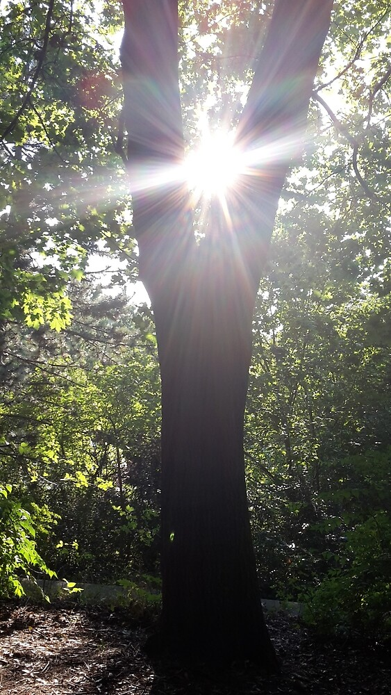 Tree sun spectacle by Woze