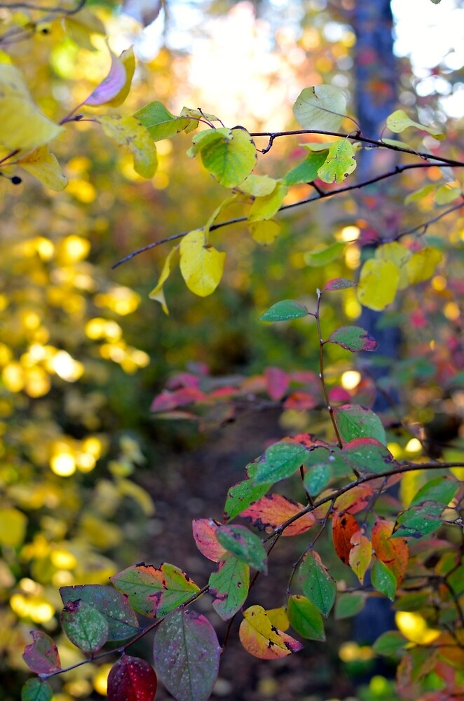 Colourful forest trail in the fall by mitchee1969