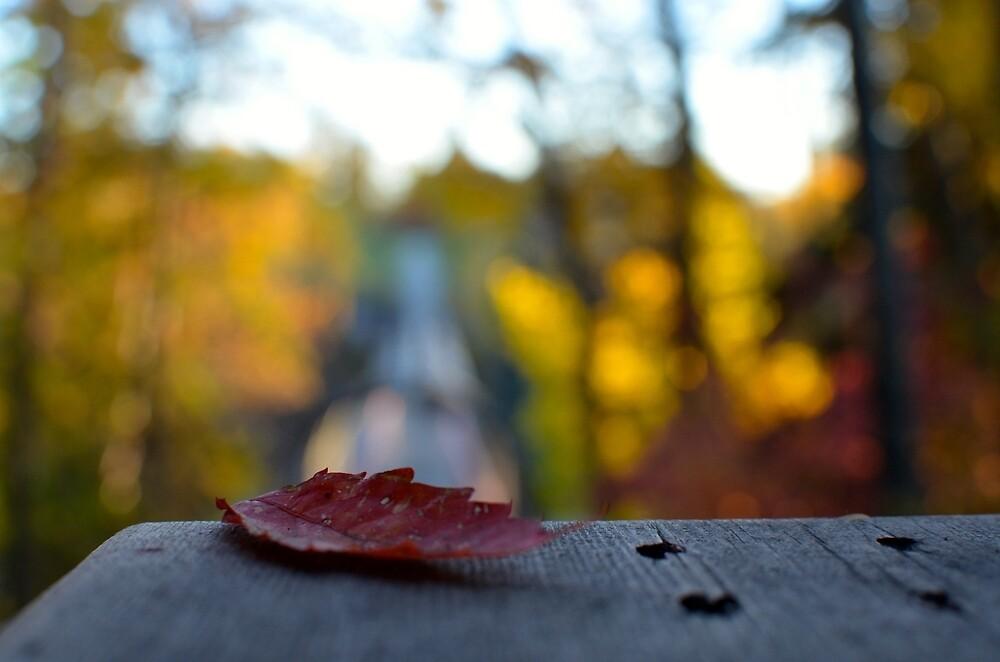 Fall leaf by mitchee1969