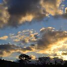 Sunset at Glenburn by Nicky Phillips