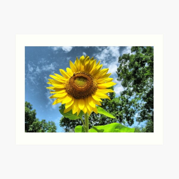 You Are My Sunshine ~ Make-A-Wish-Sunflowers Art Print