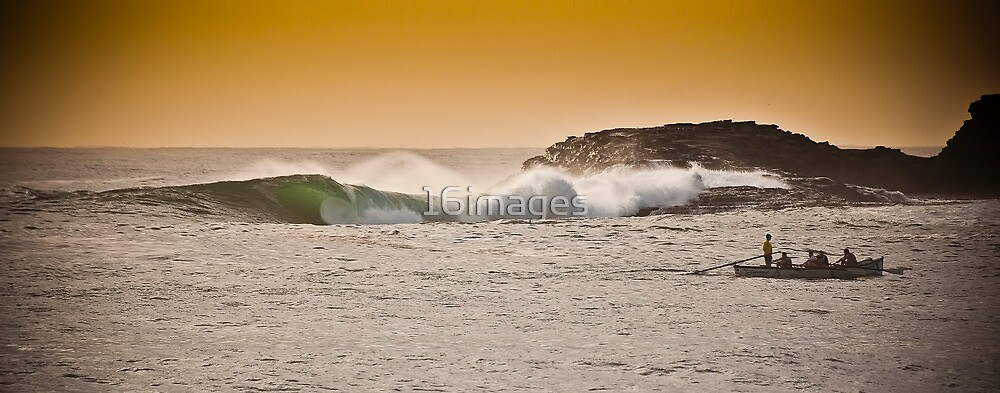 Whale Bone by 16images