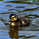 Day old swimmer  by larry flewers