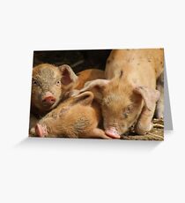 3 little pigs Greeting Card