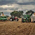 The Harvest by Steve Baird