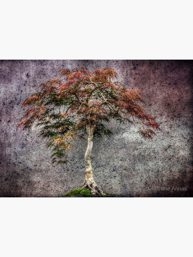 Japanese Maple by 2Bricks