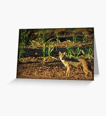 Sunrise Coyote Greeting Card