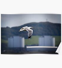 Herring Gull and Hunterston A Poster