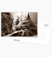 Let Sleeping Cats Lie Postcards