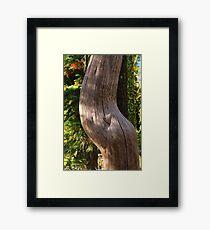 Pregnant Tree Framed Print