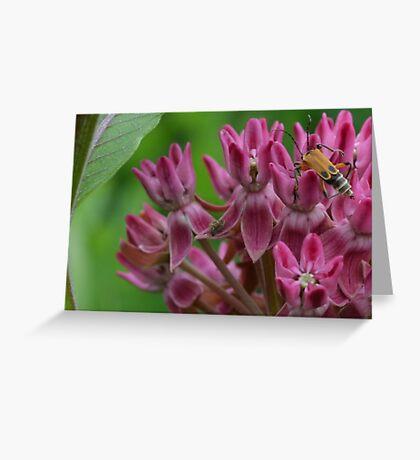 Unique bug on pink flower cluster Greeting Card