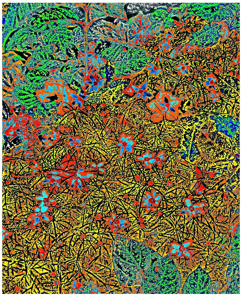 Floral #3 by Mark Ross