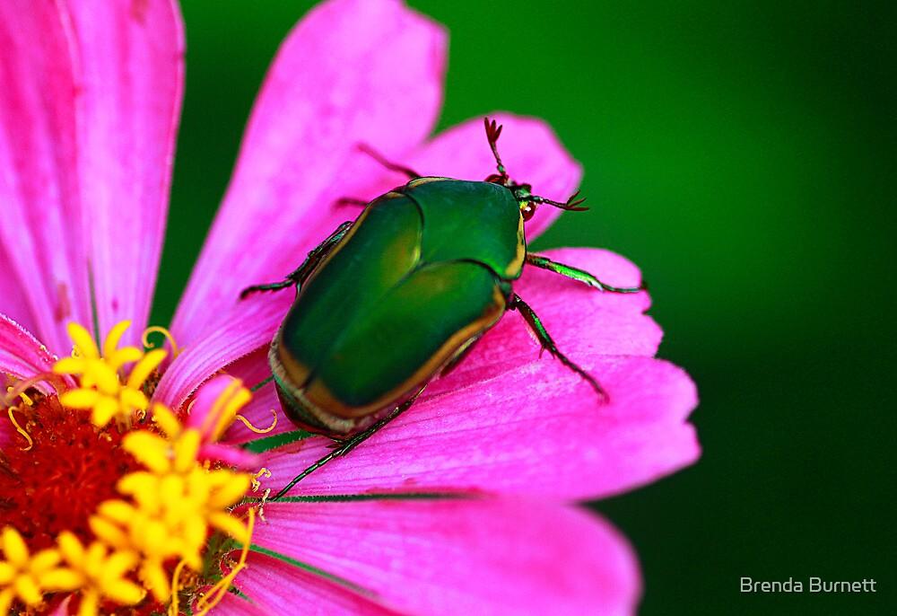 June Bug Beetle Loves Pink by Brenda Burnett