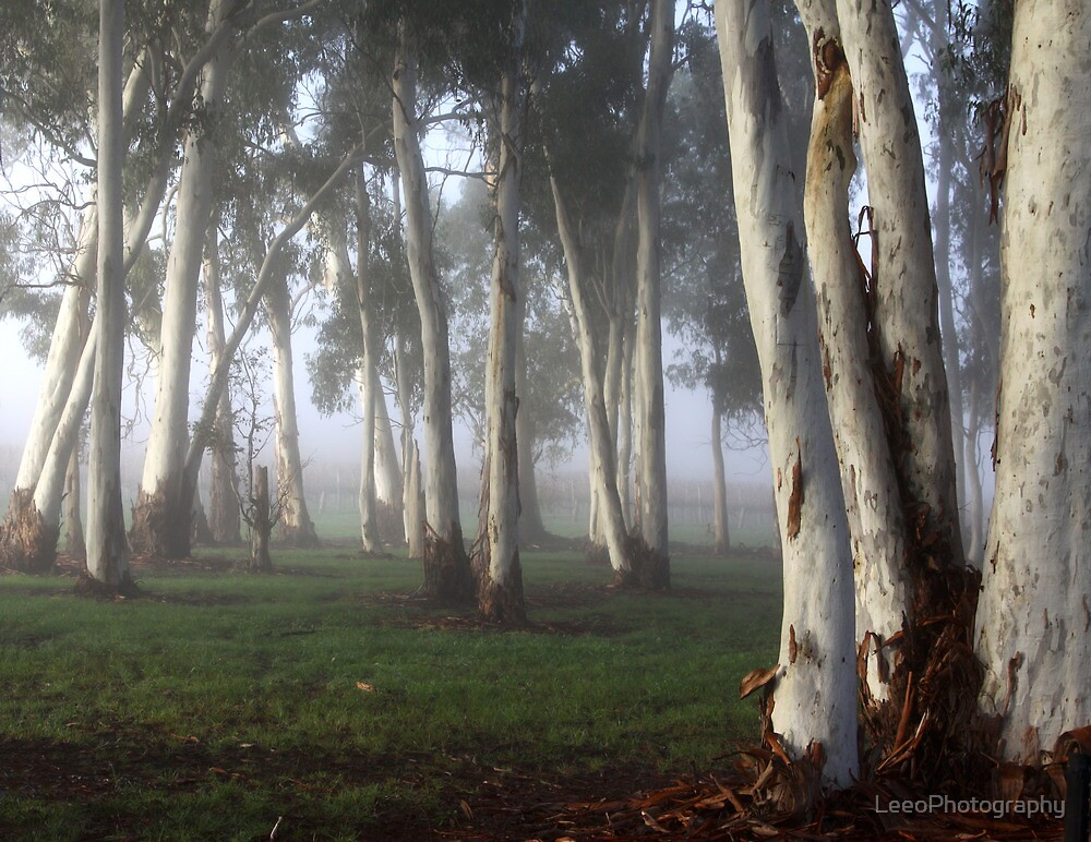 ~ Misty Morning Light ~ by LeeoPhotography
