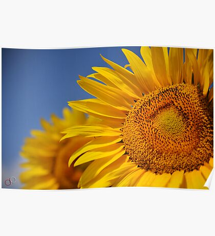 Summertime Blooms of Southern France Poster