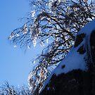 Winter Light by Jane Keats