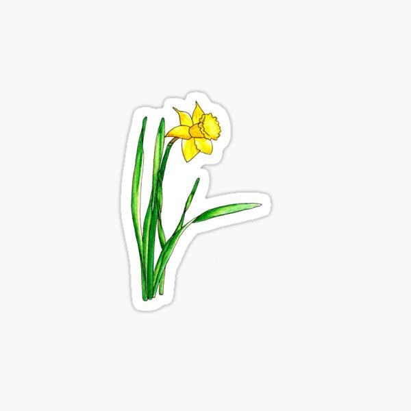 Watercolour Daffodil Spring Flower Sticker