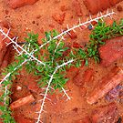 Spines in the Rockery by LouJay