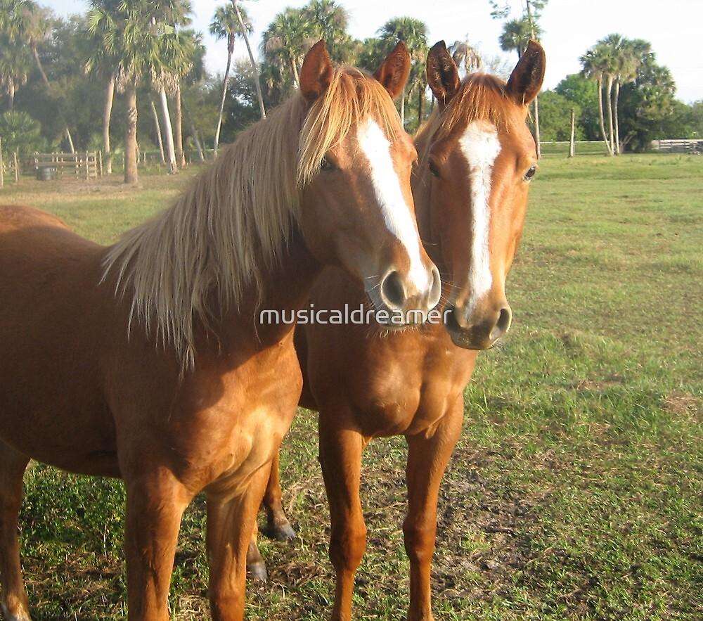 Horse Buddies by musicaldreamer