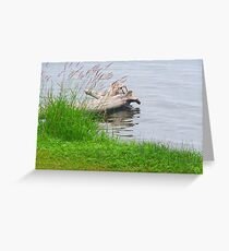 Driftwood near shore Greeting Card