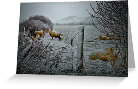 Sheep In The Snow by Charles & Patricia   Harkins ~ Picture Oregon