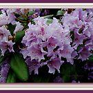 I Love Lavender! by Susan Vinson
