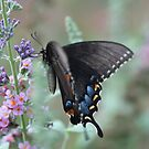 butterfly kisses by katpartridge