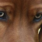 Eyes that Speak by SetterSmiles