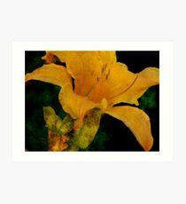 A Golden Lily Art Print