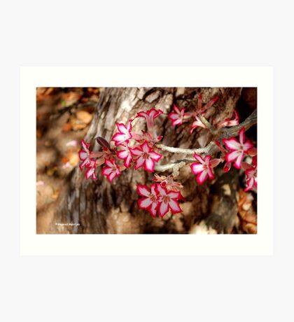 WINTER JOY IN SHINGWEDZI - The Impala lily Art Print
