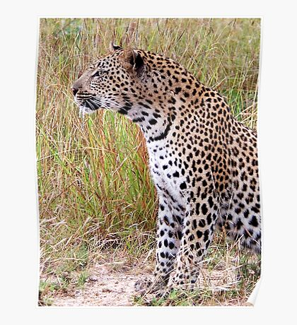 PERFECT CREATION - THE LEOPARD - Panthera pardus Poster