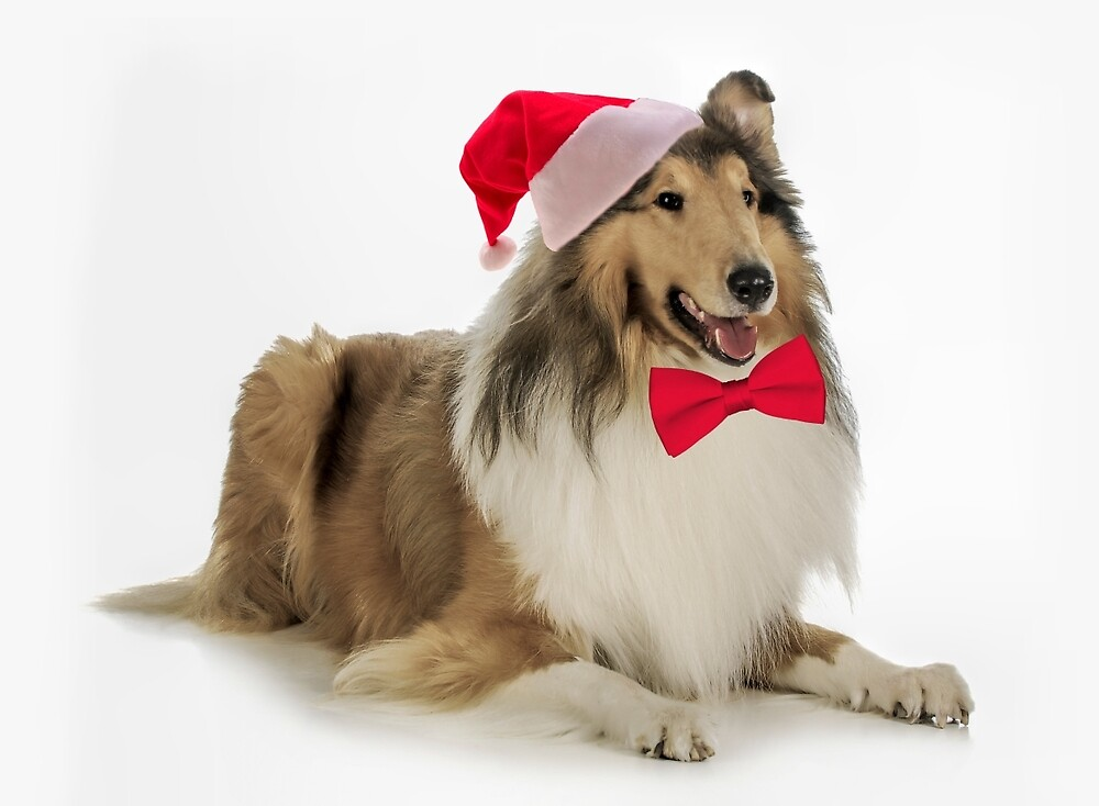 Santa Collie Christmas by DogLove