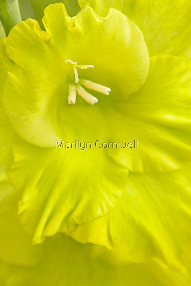 Yellow Day by Marilyn Cornwell