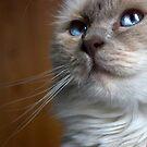 Fleur's Blue Eyes by BrightBrownEyes