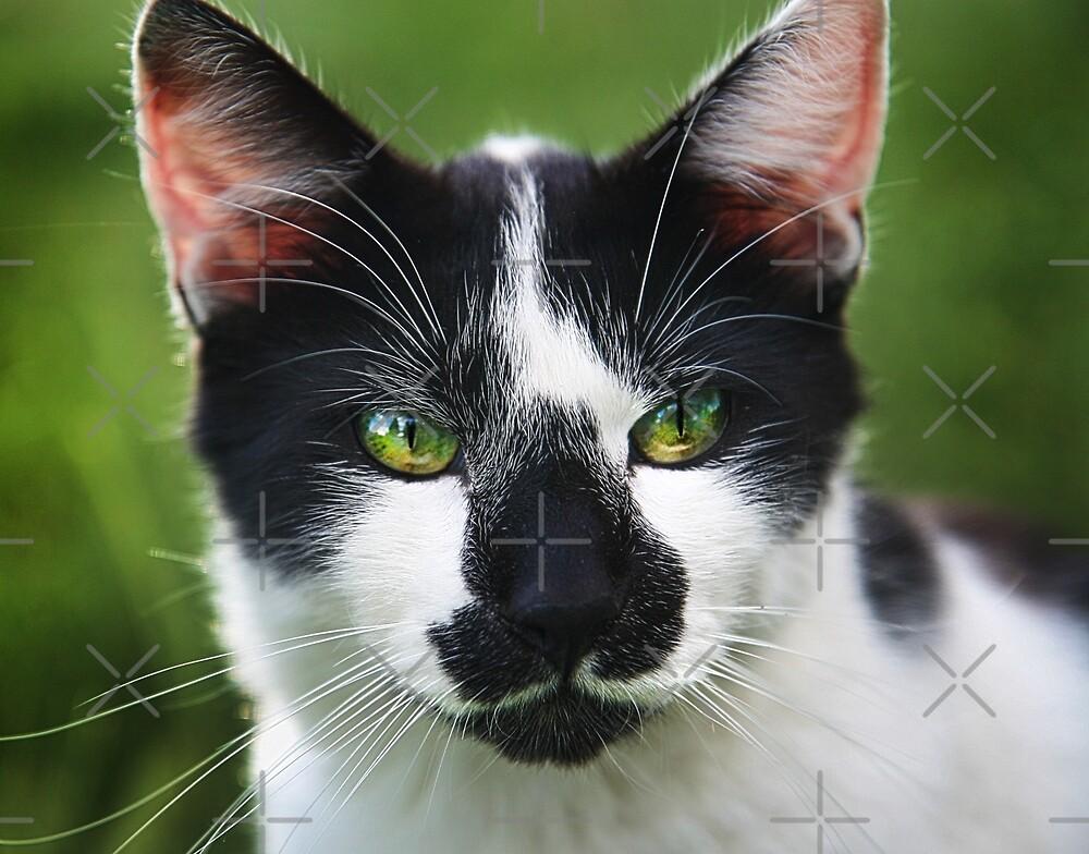 Cat Portrait, III by Alison  Pascal