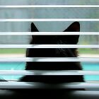 Cat In A Window by SuddenJim