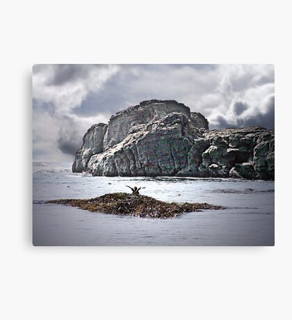 Greetings from a Seabird Canvas Print