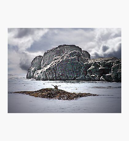 Greetings from a Seabird Photographic Print