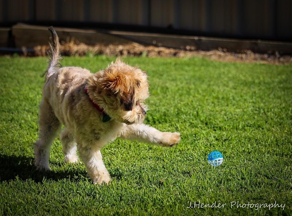 Charli Playing Outside by Josh Hender
