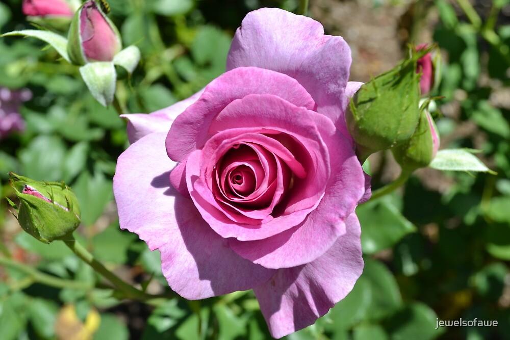 Pink Rose by jewelsofawe
