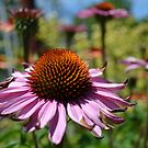 Echinacea Floral  by jewelsofawe