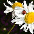 Daisy with Ladybug by jewelsofawe