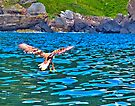 Sea Eagle near Portree on Skye, Scotland by Yukondick
