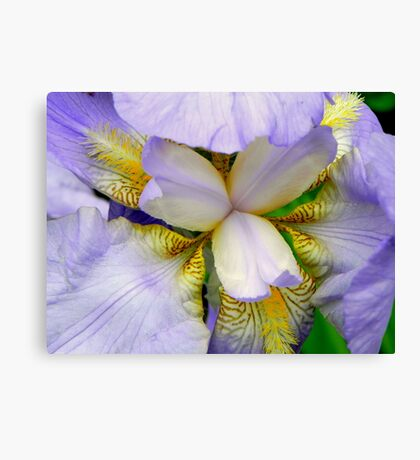 A beautiful Iris © Canvas Print