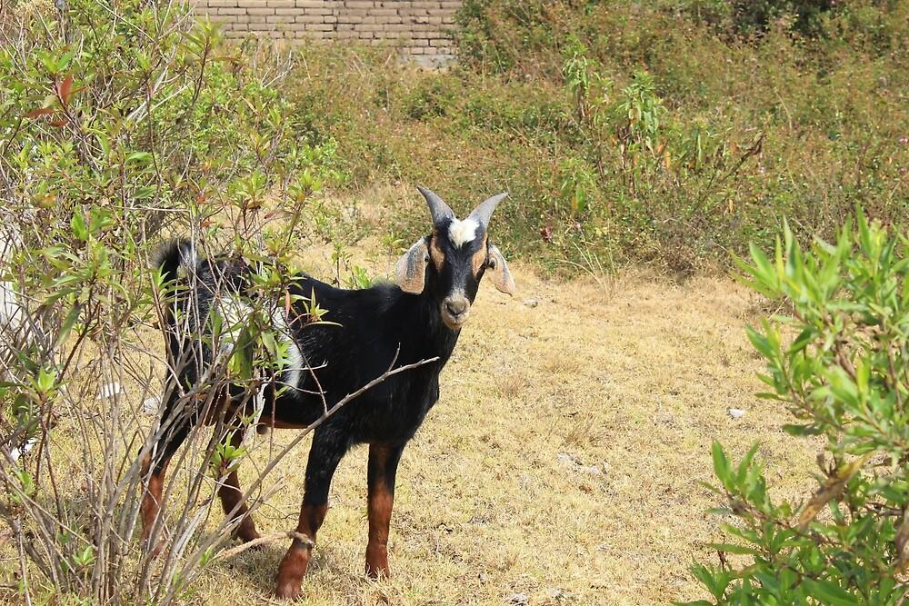 Goat Behind Bush by rhamm