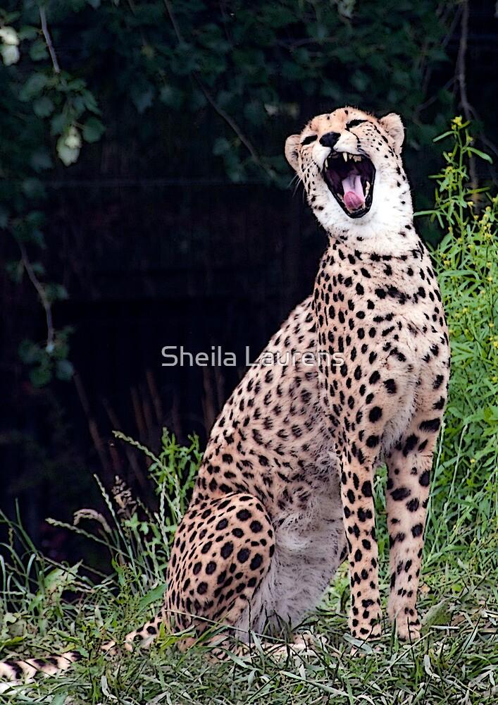 Say aahhhhh..... by dunawori