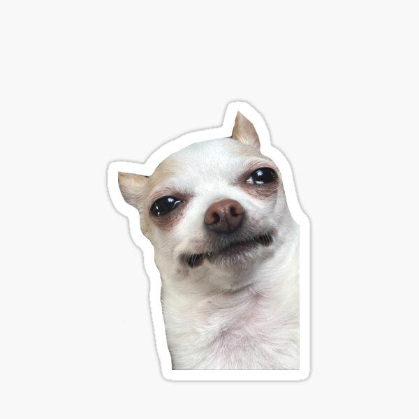 Tiktok Crying Chihuahua  Sticker