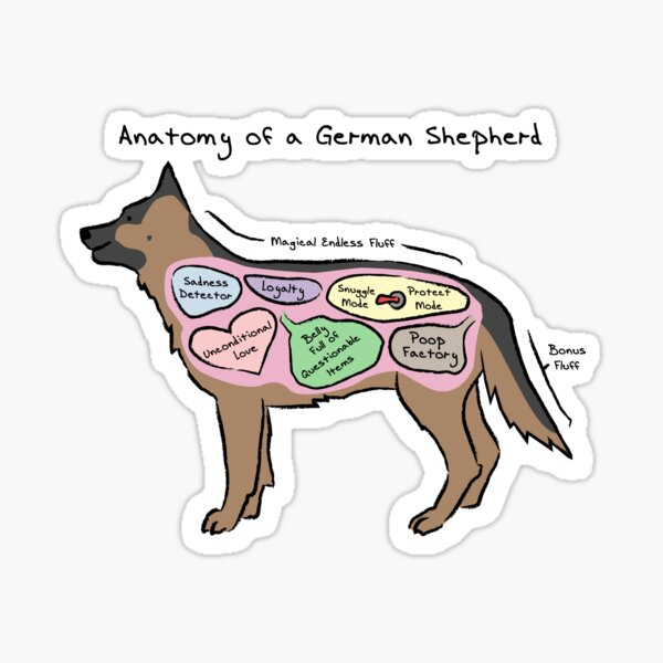 Anatomy of a German Shepherd Sticker